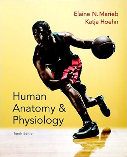 Human Analogy and Physiology